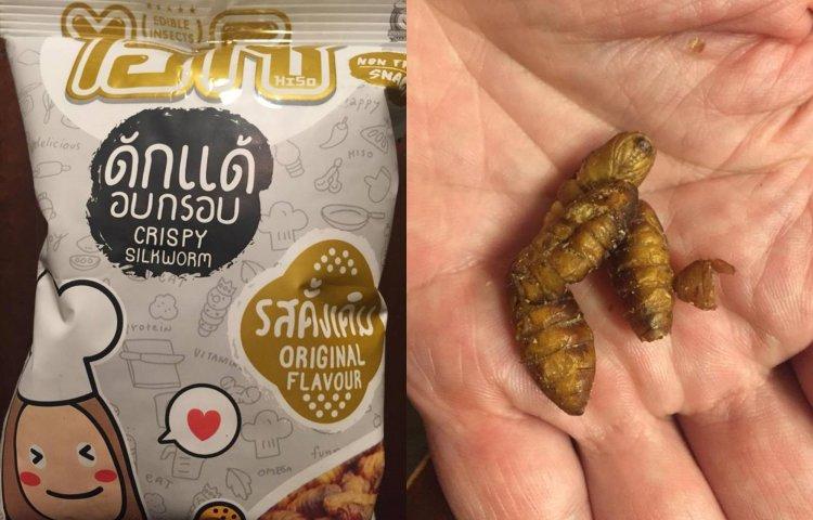 ehető rovarok - selyemhernyó nasi